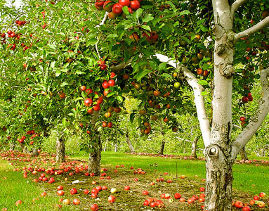 for Home interiors apple orchard collection